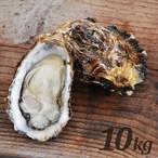 【送料無料・朝どれ直送】殻付養殖真牡蠣10kg 加熱用