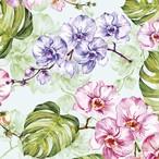 【Daisy】バラ売り2枚 ランチサイズ ペーパーナプキン WILD ORCHID WITH MONSTERA ライトグリーン