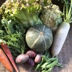 Mお手頃サイズ 宇宙イチ笑顔になれるかもしれない、旬のおまかせ野菜セット(M)