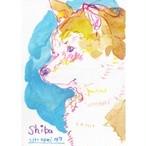 [47]柴犬