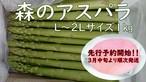 『森のアスパラ』2L~L 1㎏ 佐賀多良岳 果樹園育ち