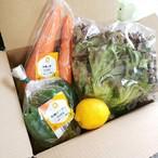 【フレッシュ野菜をクール便でお届け♪彩りサラダ野菜セット】自然栽培、農薬&化学肥料不使用で育てられた元気なお野菜3~4種をお届け [送料無料]
