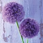 入荷しました|2020春夏【Paperproducts Design】バラ売り2枚 ランチサイズ ペーパーナプキン Purple Allium パープル