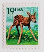 小鹿 / アメリカ 1991