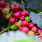 【Specialty Coffee】200g Kenya AA