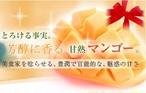 (D1)【静岡産】完熟マンゴー(贈答用)1kg