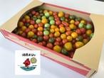 ミニトマト 3㎏ BOX