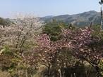 春香 -  春のいろいろな花 -300g 2020年 新入荷! ハチだけの仕事 はちみつ  生はちみつ 非加熱