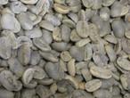 生豆 ガテマラ マラゴジッペ 1GK  (税込価格)