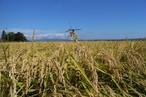 平成29年度 青森県産まっしぐら(農薬9割減、無化学肥料)玄米20キロ