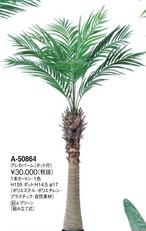 アレカパーム    花言葉「君を見守る」 高さ:155cm