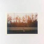 ポストカード ウラジオストック ガードレールと林