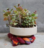 〈花器〉SHRINE ROPE POT  S