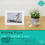 《癒やしの小鳥》シマエナガのオリジナルプリント(Lサイズ)【2,000円以上のご注文で送料無料】