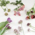 季節の花教材<春>