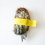 NiGuiniGui Owl   にぎにぎ フクロウ