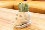 Cactus Skull - 鸞鳳玉B -