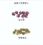 ☆☆☆☆☆アウトレット商品☆☆☆☆☆スターフラワー  ピンなしタイプ