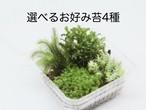 選べるお好み苔4種《苔テラリウム・コケリウム用生苔》