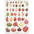 アート ポスター A2 サイズ KOUSTRUP & CO. - Tasty tomatoes 美味しいトマト