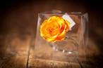 【花の誕生日プレゼント】プリザーブドフラワー/Jewel Ring-誕生日カラー-11月