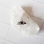 Plumeria Ring《silver925》18380020