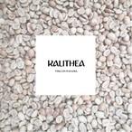 パナマ カリテア農園 コーヒー生豆 カトゥーラ ハニー 1 kg