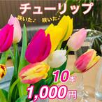特選 チューリップ10本 いわい生花TVショッピング商品