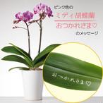 おつかれさま - ミディ胡蝶蘭2本立.ピンク色