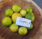 特別編★キラキラ柑橘+激レア生ベルガモット★アールグレイの香り 極上精油 他も充実