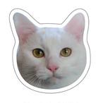 猫マグネット【ミニョン】 Face Magnet [Mignon]