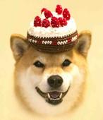 柴犬まる ポストカード -まるまるケーキー