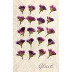 コンパクト押し花 ペラルゴニウム 少量をパックにしてお届け! 押し花素材