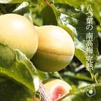 八つ葉の南高梅 完熟 1kg