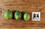 【ご家庭用 3kg】瀬戸田レモン(21〜27個) ノーワックス・防腐剤なし