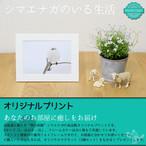 《癒やしの小鳥》シマエナガのオリジナルプリント(はがきサイズ)【送料無料】