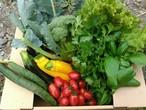 おまかせ無農薬野菜セット Mサイズ