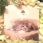 絵画 絵 ピクチャー 縁起画 モダン シェアハウス アートパネル アート art 14cm×14cm 一人暮らし 送料無料 インテリア 雑貨 壁掛け 置物 おしゃれ ネコ ねこ 猫 動物 アニマル キャット  デジタルアート ロココロ 画家 : rune 作品 : Dream