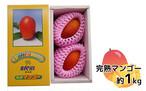 (M1) 完熟マンゴー 1Kg箱(約1kg、2~3玉入り)(化粧箱入り)