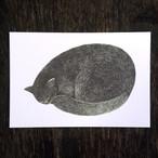 丸くなった猫(寝ている)のポストカード