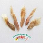 プルメリアの種:Mele Matson(5粒入り)