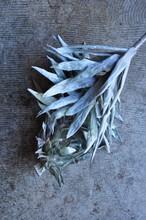 dry flower no.1 アージェンタム