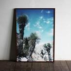 Yucca thomsoniana / B2 poster
