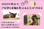 【オリジナル缶バッチ付き】保護猫活動寄付金