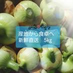 送料込み【サイズおまかせ5キロ】淡路島の新玉ねぎ