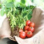 枝豆&トマトset