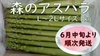 『森のアスパラ』L~2L 1㎏ 佐賀多良岳 果樹園育ち