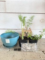 ハーブ2種 栽培キット ecoformsポット&受皿