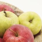 山実りんごミックス 通常品 2段(約10kg)予約受付中