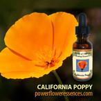 カリフォルニアポピー (pw-s009)